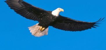 eagle-soaring-high.jpg